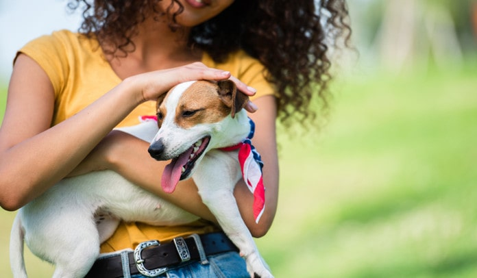 using cbd oil for pets