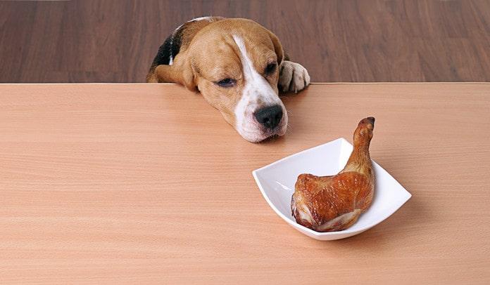 dog allergic to chicken