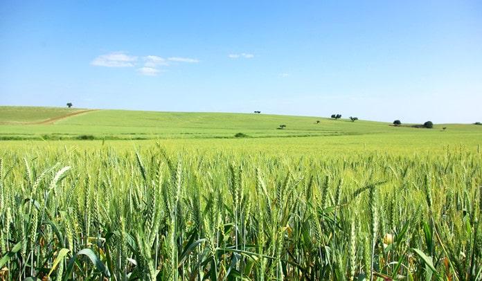 gmo crop farming